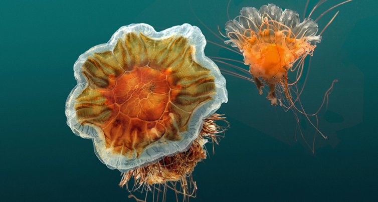 Here's the real story on jellyfish taking over the world