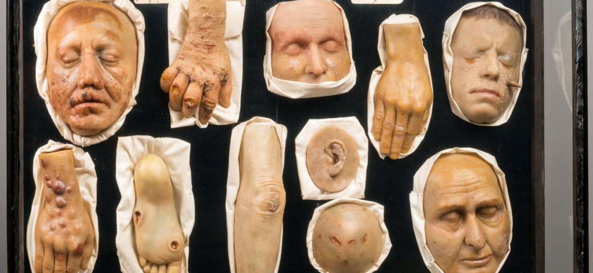 body parts in a display
